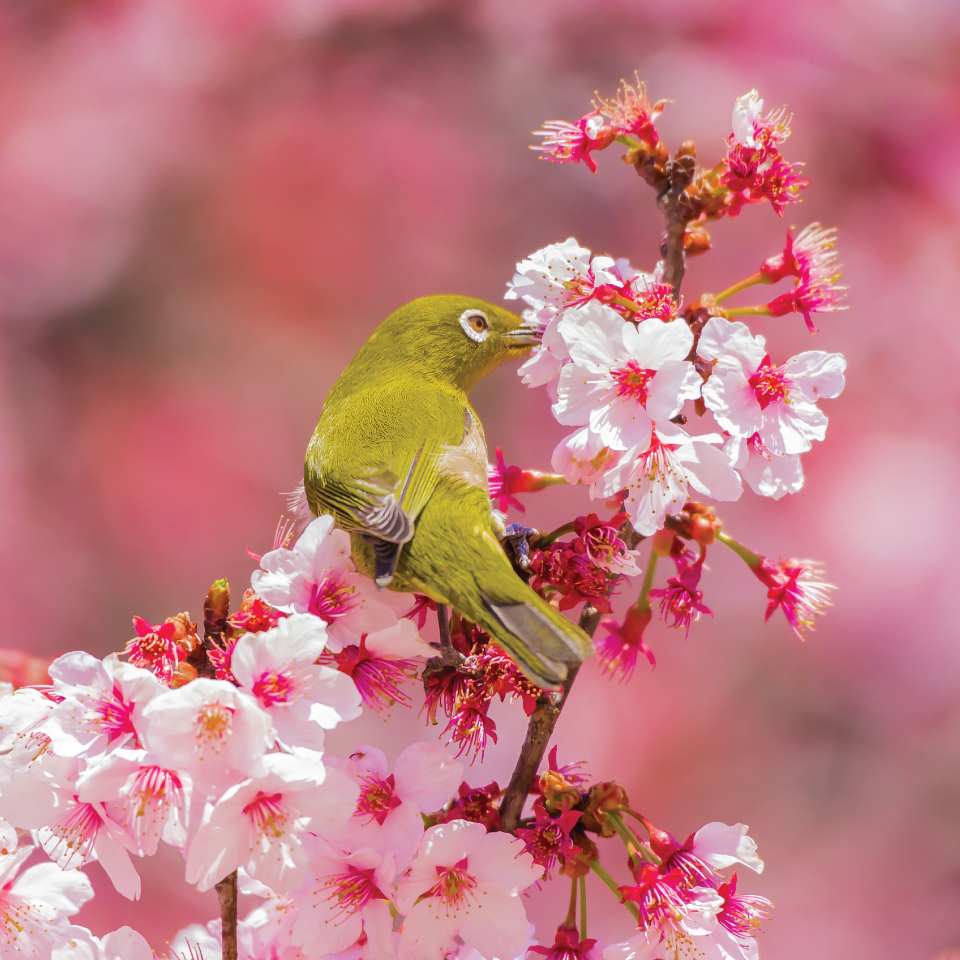 B009-2066-Springwatch-in-Japan-3.jpg